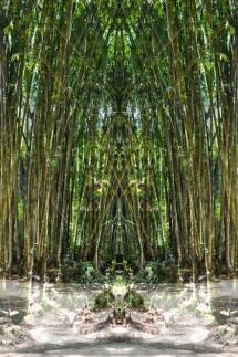 Jardimbotanico1