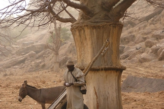 Baobab_WP